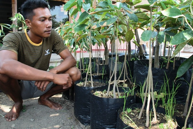 Melihat Pembibitan Durian dengan Sambung Pucuk di Desa Sugihwaras, Kecamatan Ngoro