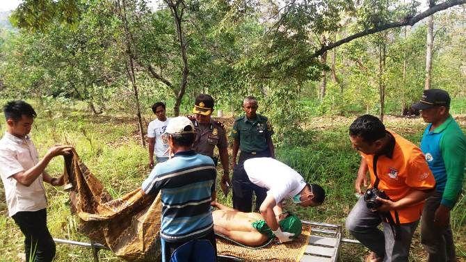 Petugas dari Polsek Wonosalam mengevakuasi tubuh Ahmad Safrudin dari atas pohon durian
