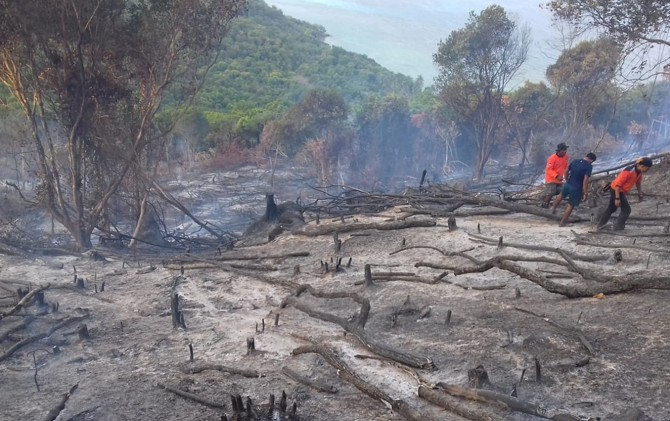 TERBAKAR: Lahan seluas dua hektare terbakar di dataran tinggi Karimunjawa kemarin. Penyebab kebakaran belum diketahui.