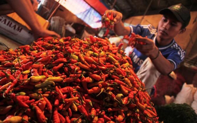 Pedagang cabai rawit memilah dan memilih kualitas cabai untuk diperjualbelikan.