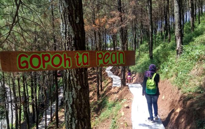 Pengunjung menikmati destinasi Hutan Pinus Gotekan, Kec. Pacet, Mojokerto.