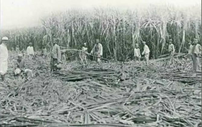 Pemerintah kolonial membuka kesempatan pada swasta untuk andil dalam produksi komoditas perkebunan.