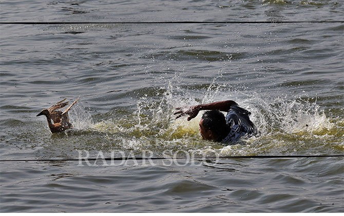 Mengejar bebek dalam Lomba Gethek di Rowo Jombor, Selasa (19/6).