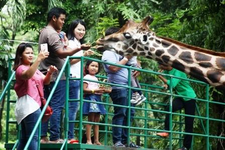 FEEDING TIME: Pengunjung memberi makan satwa Jerapah di Kebun Binatang Surabaya (KBS). Saat ini warga masih menjadikan KBS tempat favorit untuk berlibur bersama keluarga.
