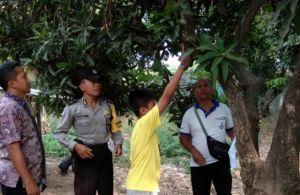 Rematik, Nenek Asal Penyabangan Gantung Diri di Pohon Mangga