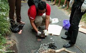 Heboh! Bangkai Orok Laki-Laki Membusuk Ditemukan Nyaris Dimakan Anjing