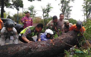 Pohon Tumbang di Jalur Utama Boyolali