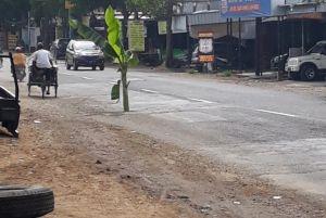 Lubang Jalan Sering Bikin Celaka, Warga Kesal Pilih Tancapkan Pisang