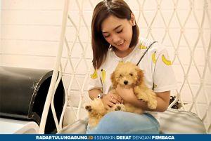 Pentingnya Vaksinasi dan Grooming bagi Anjing Kesayangan Anda