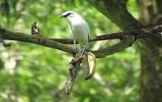 Kembangkan Ekowisata, Tiga Desa Dua Kabupaten Garap Curik Bali