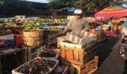 Jamin Sistem Pemasaran, Bali Perlu Pasar Induk Buah Tropis