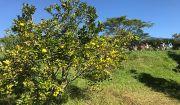 Kembangkan Lima Desa Wisata, Badung  Kucurkan Rp 133 Miliar