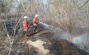 Tak Tersentuh Hujan, 5 Hektar Kebun Mente dan Mangga di Kubu Terbakar