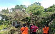 Gudang dan Rumah Rusak Parah Tertimpa Pohon
