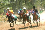 Gelar Pacuan Kuda, Pordasi Berharap Masuk KONI Lagi