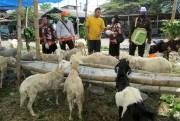 Ini yang Dilakukan Dinas Peternakan untuk Awasi Hewan Ternak