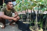 Ditangan Ongen, Satu Bibit Durian Bisa Disambung Tiga Akar