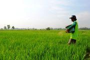 Disperta Jombang: Tiga Jenis Pupuk Subsidi yang dikurangi Jatahnya