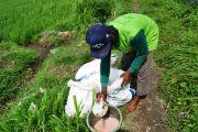 Pupuk Subsidi Dikurangi, Petani Jombang Diminta Berhemat