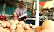 Harga Telur Ayam Masih Anjlok