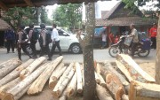 Petugas Gabungan Sita Enam Truk Kayu Ilegal dari Rumah Warga