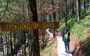 Merasakan Hutan Pinus Pacet, Dimanjakan Kesejukan Tiga Gunung