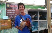Peternak Ini Sukses Budidayakan Ayam Pendeteksi Gempa Bumi