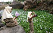 Lautan Enceng Gondok di Dam Jetu Mendadak Jadi Objek Wisata Baru