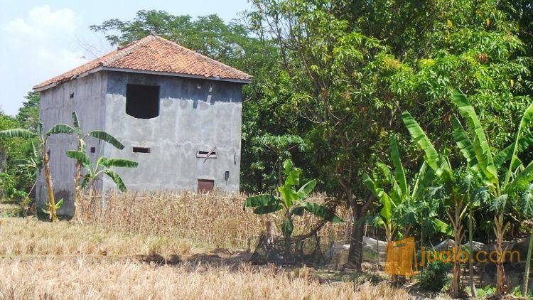 murah tanah seluas 644m2, berikut ex. rumah walet di cipancuh haurgelis indramayu