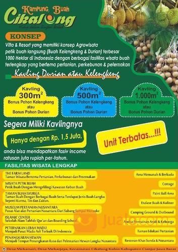 kavling kebon durian musang king bebas riba