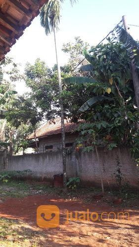 pohon pinang hanya 1