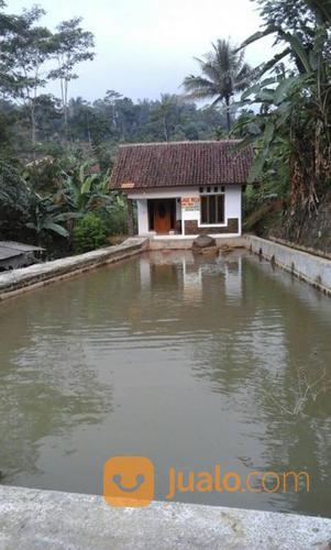 rumah vila dan kolam ikan 1100 m2 di wanayasa purwakarta