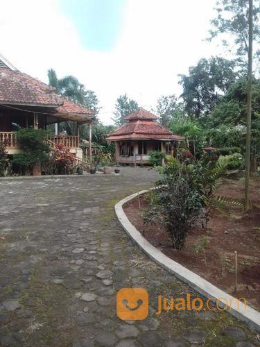 villa dan kebun salak luas tanah 5 ha darangdan purwakarta jawa barat