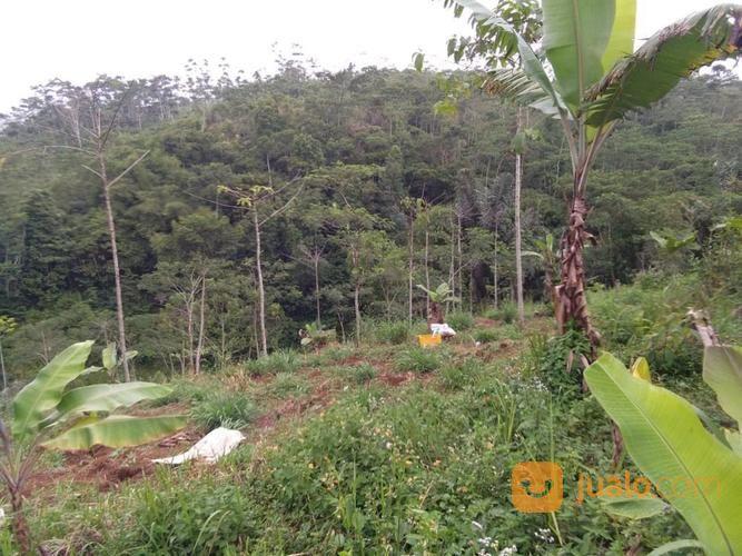 Dijual Tanah 200 Hektar Waa2
