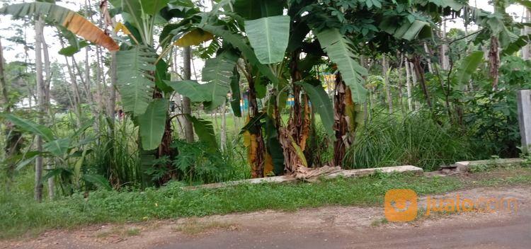 tanah murah di prambanan lebar depan 8 meter terjangkau harganya