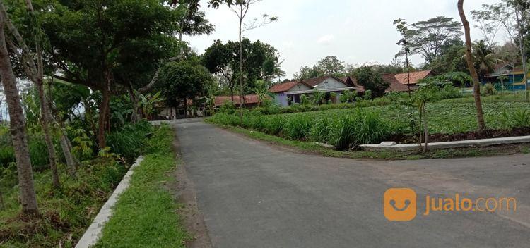 tanah murah di prambanan terjangkau harganya lebar depan 8 meter