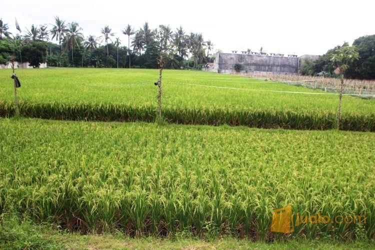 tanah murah lokasi strategis depan ex bandara selaparang mataram lombok ntb