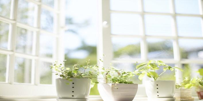 Plants in a Window