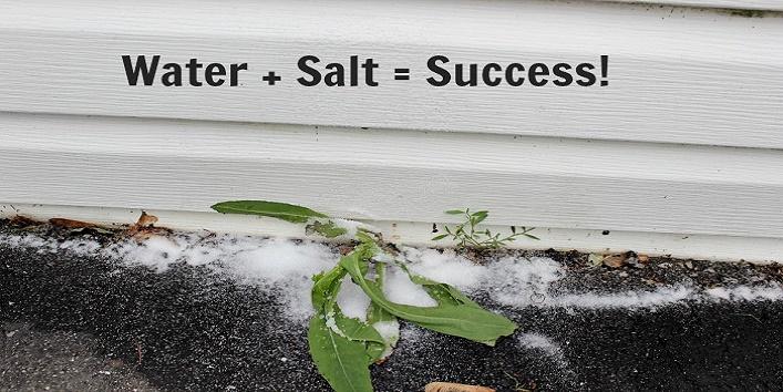 uses-of-table-salt8