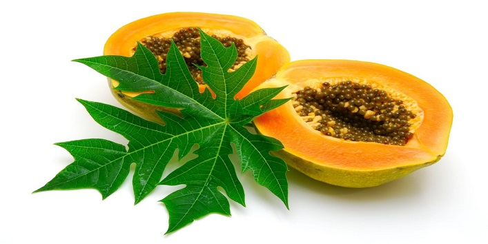 Study on papaya leaves