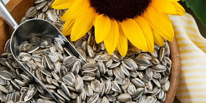 Sunflower-seed