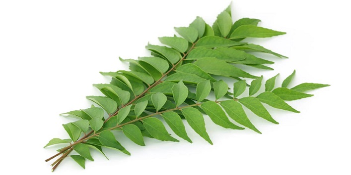 Curry leaves to combat premature grey hair