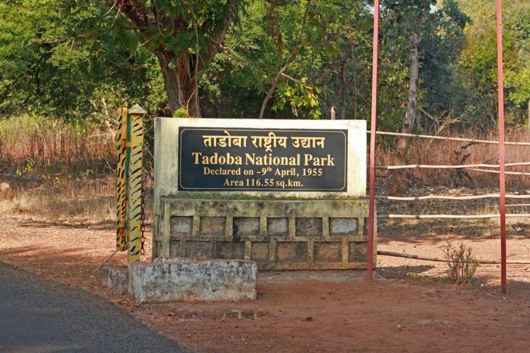 Tadoba-Kesari-Tours