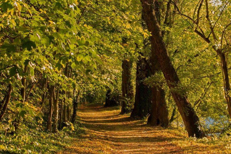 Tadoba-National-Park-forest-Kesari-Tours
