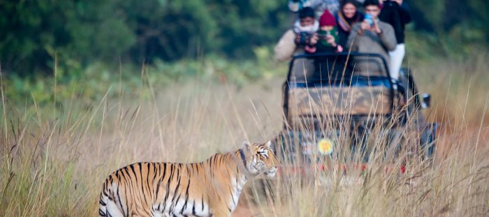 Tadoba-Wildlife-jeep-safari-Tour-Kesari-Tours
