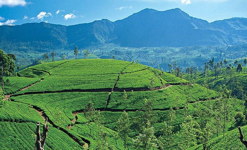 Ceylon-Kesari-Tours