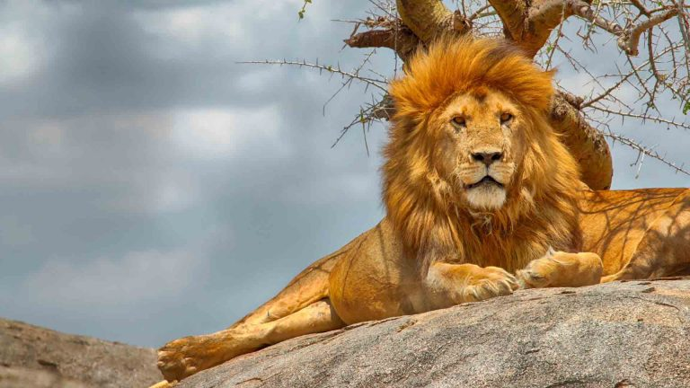 Serengeti-National-Park-Kesari-Tours