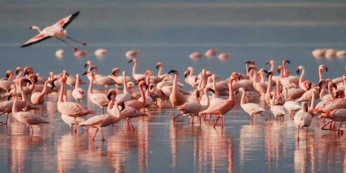 Lake-Manyara-Kesari-Tours