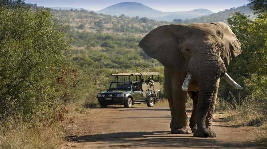 Africa-Kesari-Tours