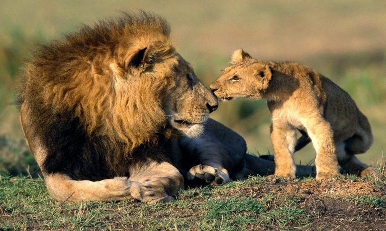 Gir-National-Park-Kesari-Tours